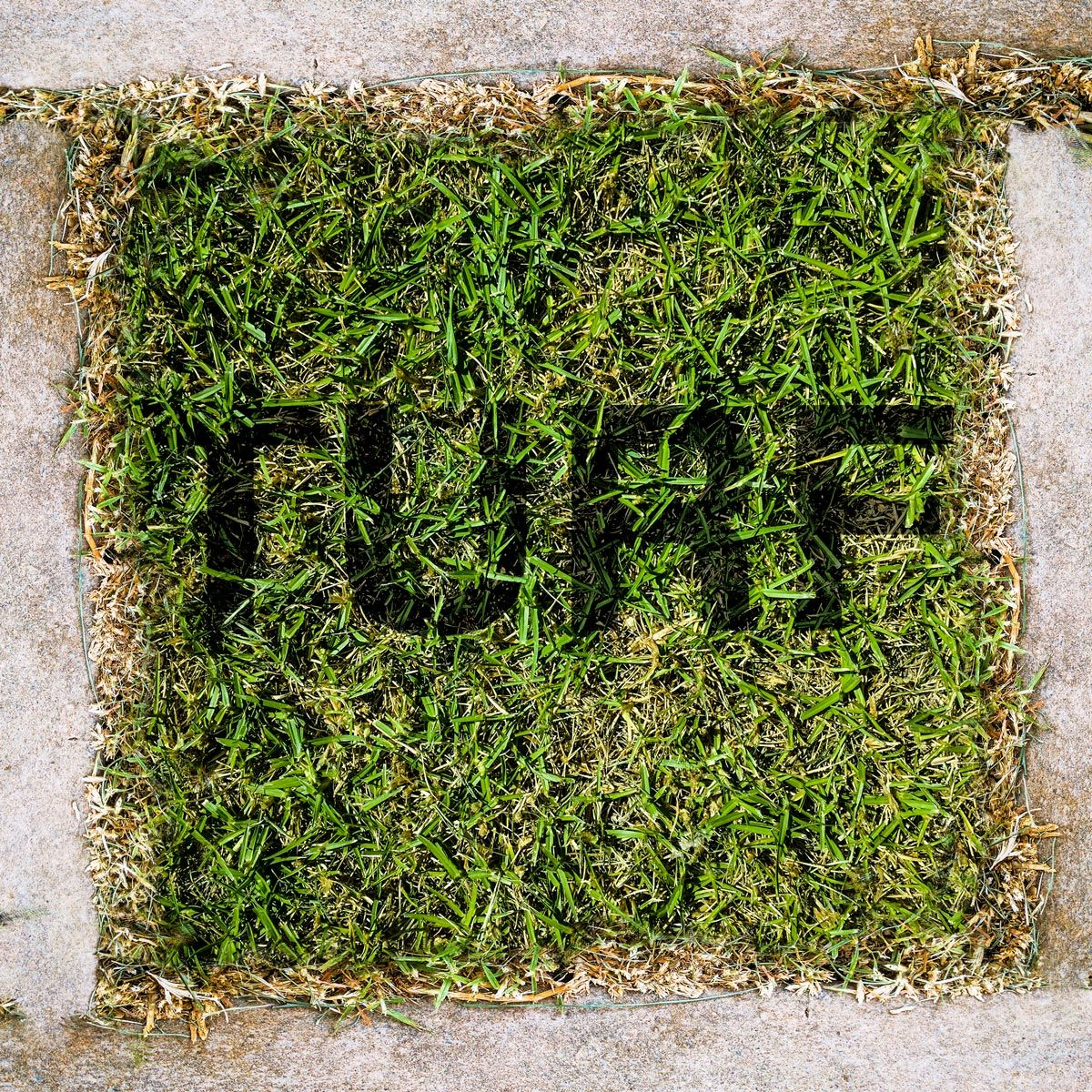Turf Texture Project